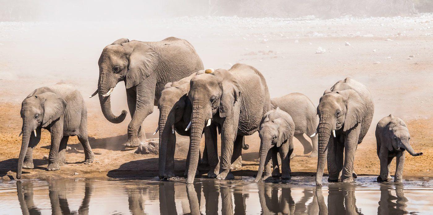 Ý nghĩa giấc mơ thấy voi - THabet