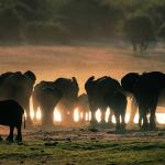 Tìm hiểu những con số đặc biệt và điềm báo khi nằm mơ thấy voi